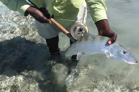 Medium bonefish6