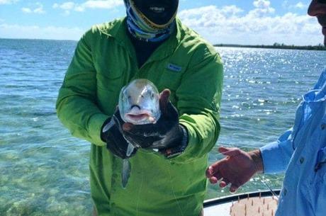 Medium bonefish7